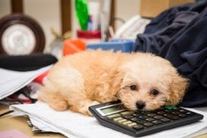 Accounting For Veterinary Practice Owners | Ohio CPA Firm
