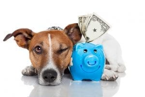Tax Services For Veterinary Practice Owners | Ohio CPA Firm