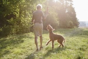 Retirement Planning For Veterinary Practice Owners | Ohio CPA Firm