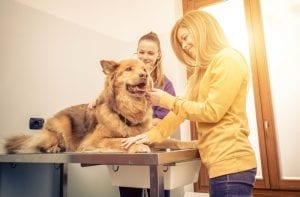 Veterinary Services | Practice Management | Ohio CPA Firm